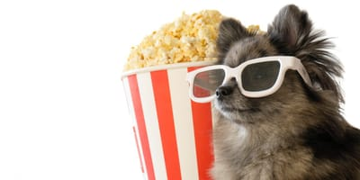 ¿Los perros pueden comer palomitas o les hacen mal?