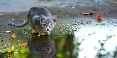 W powodzi w Niemczech zaginęły koty: ostatnio pojawiły się niesamowite wieści