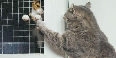 Cuando ven su cara, todos se niegan a adoptar a este gato