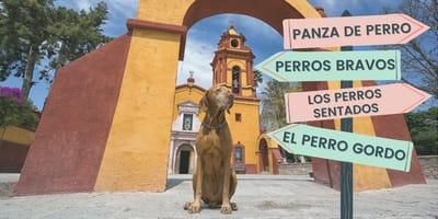 Más de 150 lugares en México tienen nombre de perro, ¿sabes cuáles son?