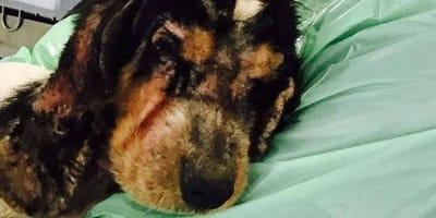 Dan a un perro por muerto: ocurre un milagro con la ayuda de miles de personas