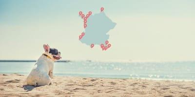 Playas para perros en Francia 2021: la lista completa