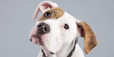 Macchie rosse sulla pelle del cane: le possibili cause