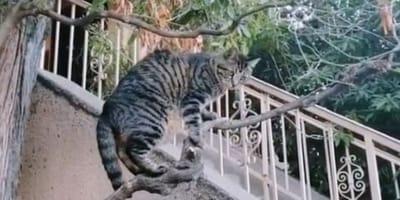 Gatto porta uccellino alla padrona, poi cambia idea (Video)