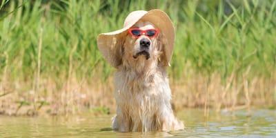 Hondsdagen: wat zijn het en wat heeft het met honden te maken?