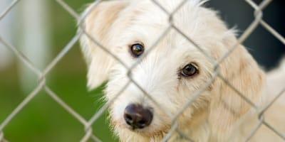 Pies ze schroniska - porady dla adoptujących