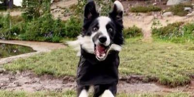 Passeggiano e il cane fa una cosa stupida che fa ridere tutti!
