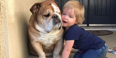Bulldog no quería moverse,  pero al nacer sus hermanos -humanos- da un cambio RADICAL
