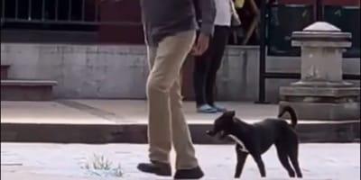 En TikTok, este hombre 'baila' como su perro por una noble causa