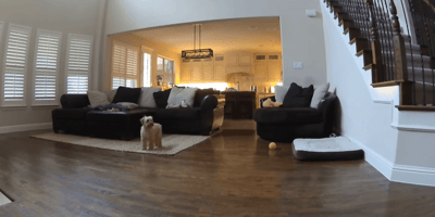 Man calls his dog on video phone: Her reaction surprises everyone
