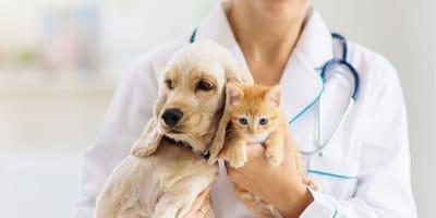veterinaria con in braccio un cane e un gatto