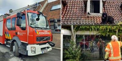 Brandweer rukt uit voor bijzondere viervoeter in dakgoot