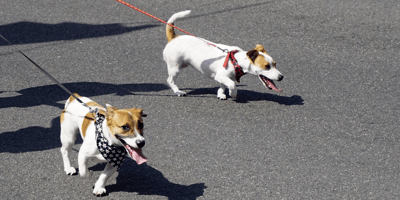 Petition to forbid walking dogs in 20°C heat gathers thousands of signatures