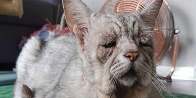 """Este es el gato """"triste"""" más popular del mundo"""