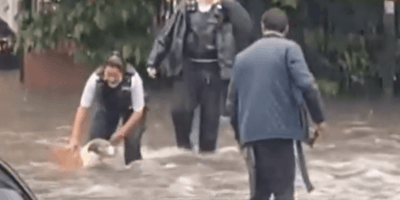 Dog seen drifting in London flood water: Police officer rushes to help