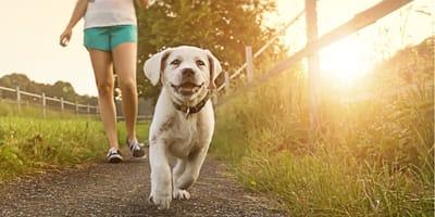 Hundehalter sollen Strafe bezahlen, wenn sie bei über 20°C Gassi gehen