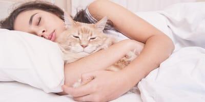 Se revelan las razones por las que los gatos duermen con nosotros