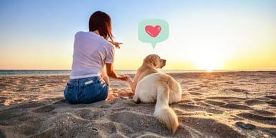 ¿Por qué un perro no es como un amor de verano?