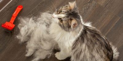 Estas son las razones por las que tu gato bota tanto pelo