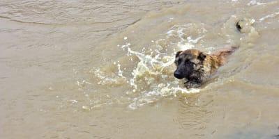 Wichtige Info für Tierfreunde aus dem Katastrophengebiet in Bad Neuenahr