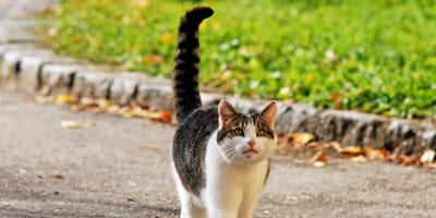Gato sale de su escondite con la cola hinchada: se agacha a ver qué pasa y ¡recibe el susto de su vida!