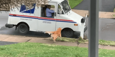 Owner giggles when she realises why her dog loves going to pick up the mail
