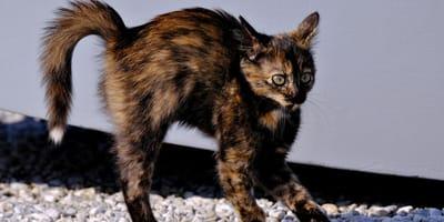 Kot ucieka spod werandy z nastroszonym ogonem: kiedy opiekunka tam zagląda, staje jej serce
