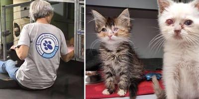Hulpeloze kittens krijgen tweede kans dankzij Leids dierenasiel