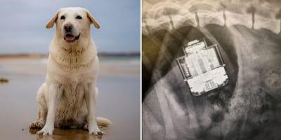 Airpods gevonden in maag hond