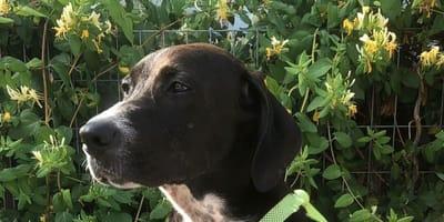 Abandonan a su cachorro con una excusa repugnante en Málaga