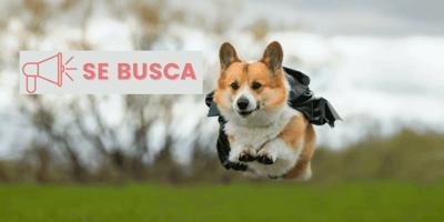 Se busca ''super perro'' en Asturias para ayudar a un niño con autismo