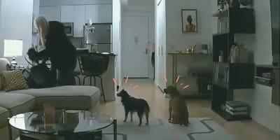 paseadora de perros en la casa
