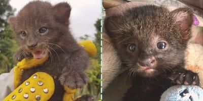 Rescata un gatito huérfano: al llegar a casa descubre que cometió un terrible error