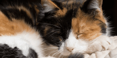 Dog joins calico sister for a nap: The way she reacts is unbelievable