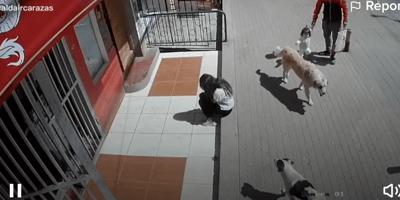 Está sentada en la banqueta: un perrito la confunde con un poste y ocurre lo peor