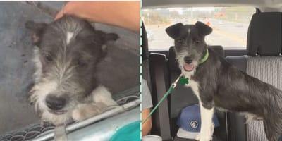 Su humano desaparece en  una ambulancia y no lo vuelve a ver, pero este perrito no pierde la esperanza