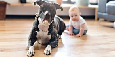 Pitbull entdeckt Baby: Das Video der beiden ist GÄNSEHAUT pur!