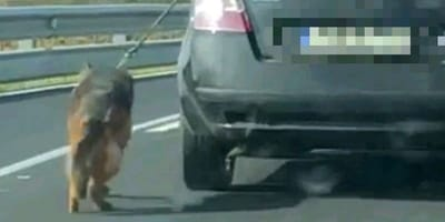 La policía salva la vida de un perro al que llevaban colgando de un coche a más de 140 kilómetros por hora