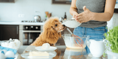 Home cooking for your dog : Yay or Nay? Let us know in this survey!