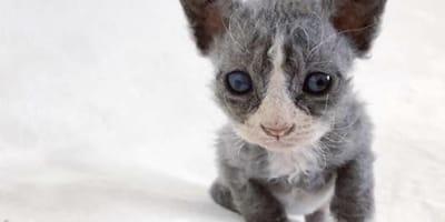 """Encuentran un """"gato de peluche"""" con una enfermedad muy rara dentro de una caja"""