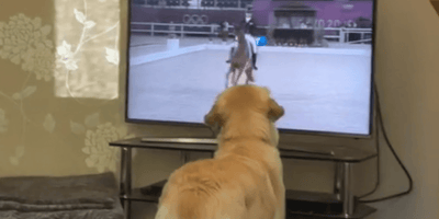 Dog watches dressage at the Olympics: Her reaction leaves everyone in stitches