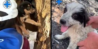 La Sicilia brucia: ecco gli animali salvati dai volontari (Video)