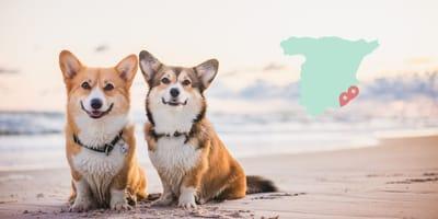 Playas para perros en Alicante 2021: la lista completa