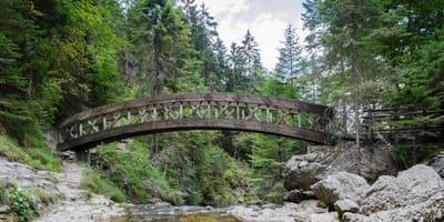 Mysteriöser Fund auf Brücke in Wald erschüttert Rheinland-Pfalz!