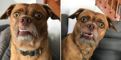 From death row to Instagram stardom: Meet Bacon, the very expressive dog