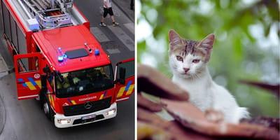 Man redt kat maar moet vervolgens zelf gered worden