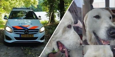 Honden ontsnappen voor de zoveelste keer en worden in beslag genomen
