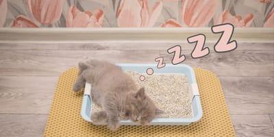 Por qué mi gato duerme en el arenero: causas de esta conducta