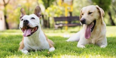 Lieve honden: wat is het liefste hondenras?