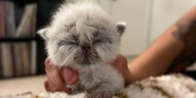 Frau adoptiert Kätzchen: Kurze Zeit später wird es zum Star im Internet!